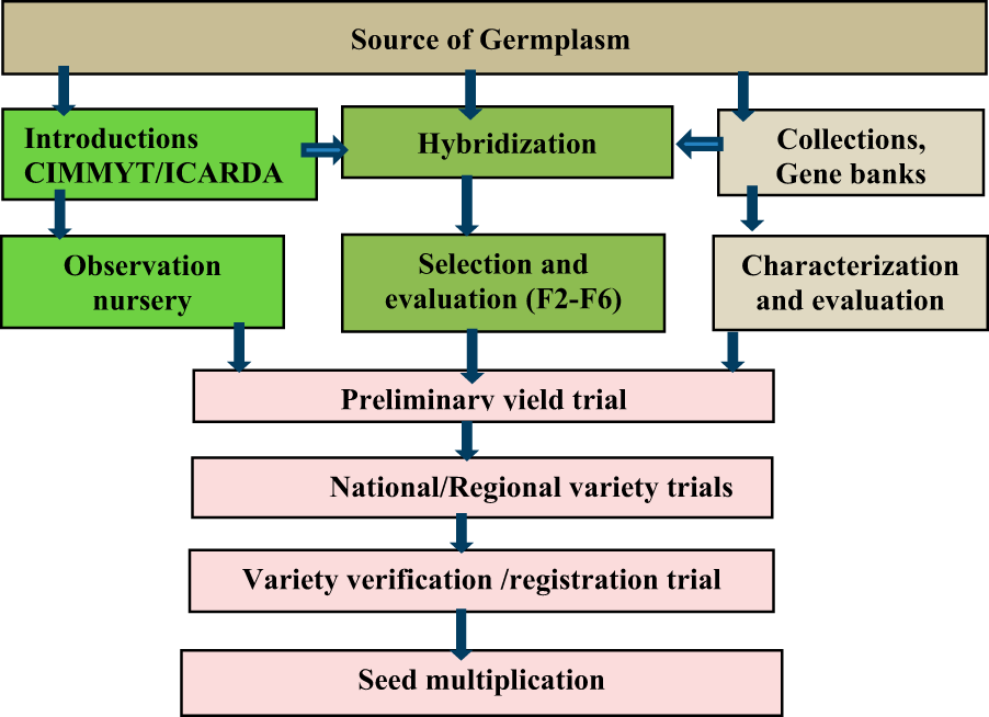 Wheat production and breeding in Sub-Saharan Africa: Challenges and